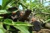 Agricoltura Biologica - Coccinelle