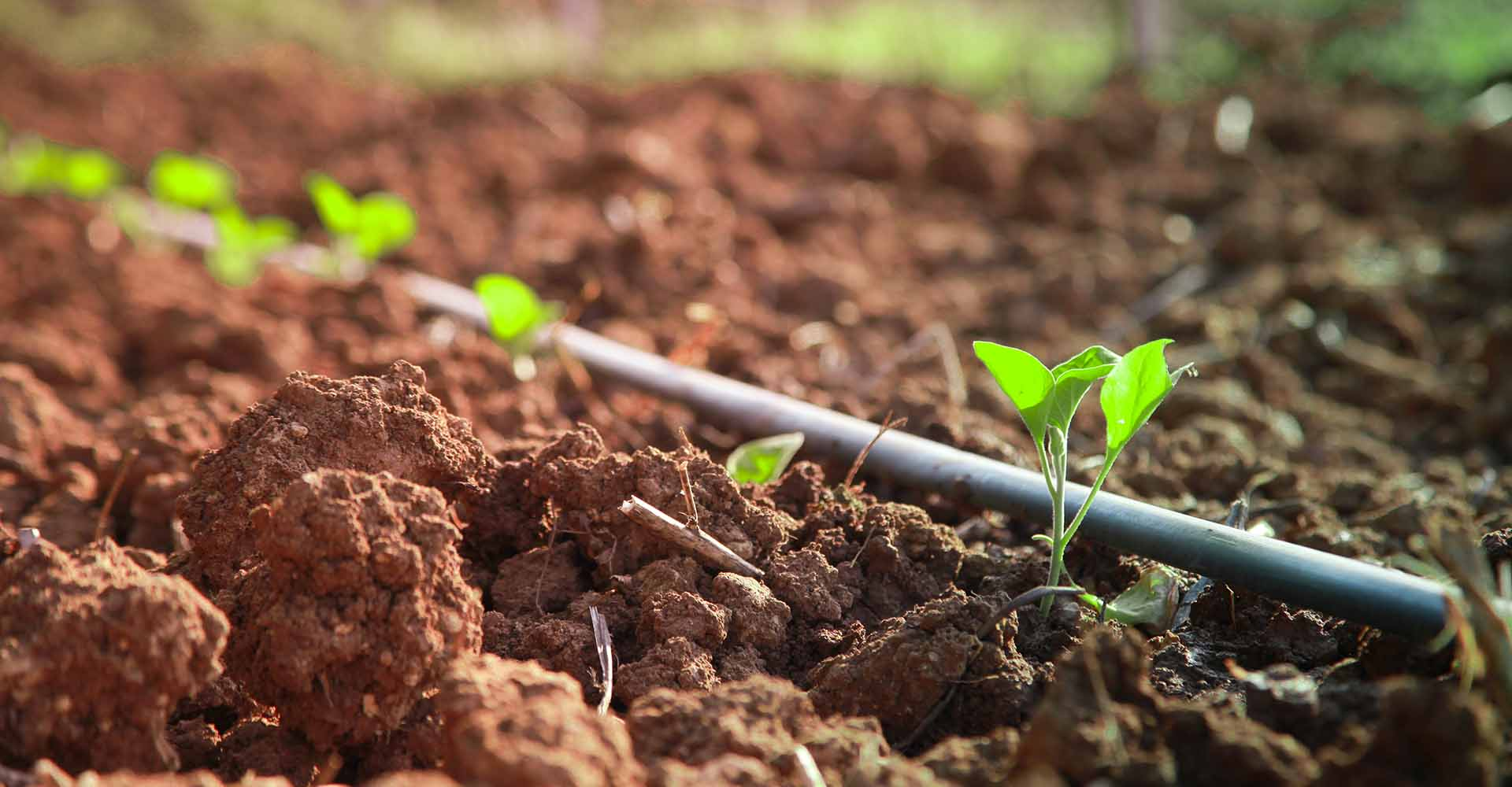 Il Pago Agriturismo in Basilicata