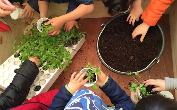 Scuola elementare in fattoria didattica