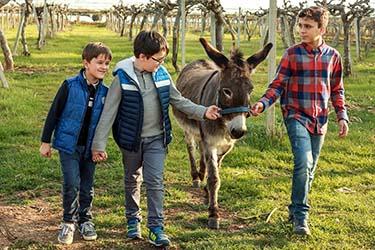 Asinello attività fattoria didattica azienda agrituristica Il Pago