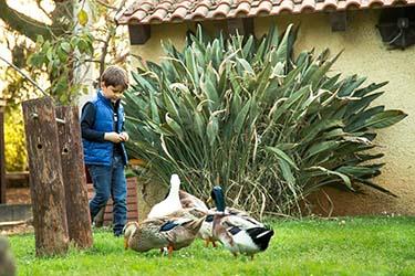 Oche bambini fattoria didattica azienda agrituristica Il Pago