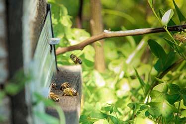 Alveare api azienda agrituristica Il Pago in Basilicata