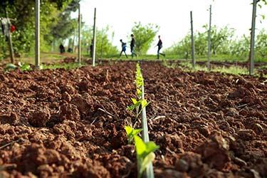 Produzione ortaggi biologici azienda agrituristica Il Pago