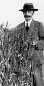 Senatore Cappelli - grano