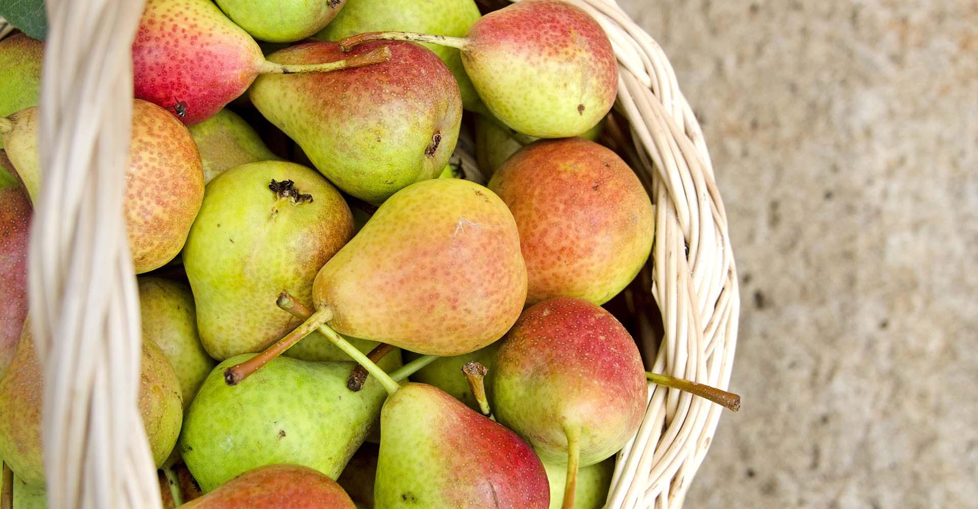 Pera Signora - Presidio Slow Food