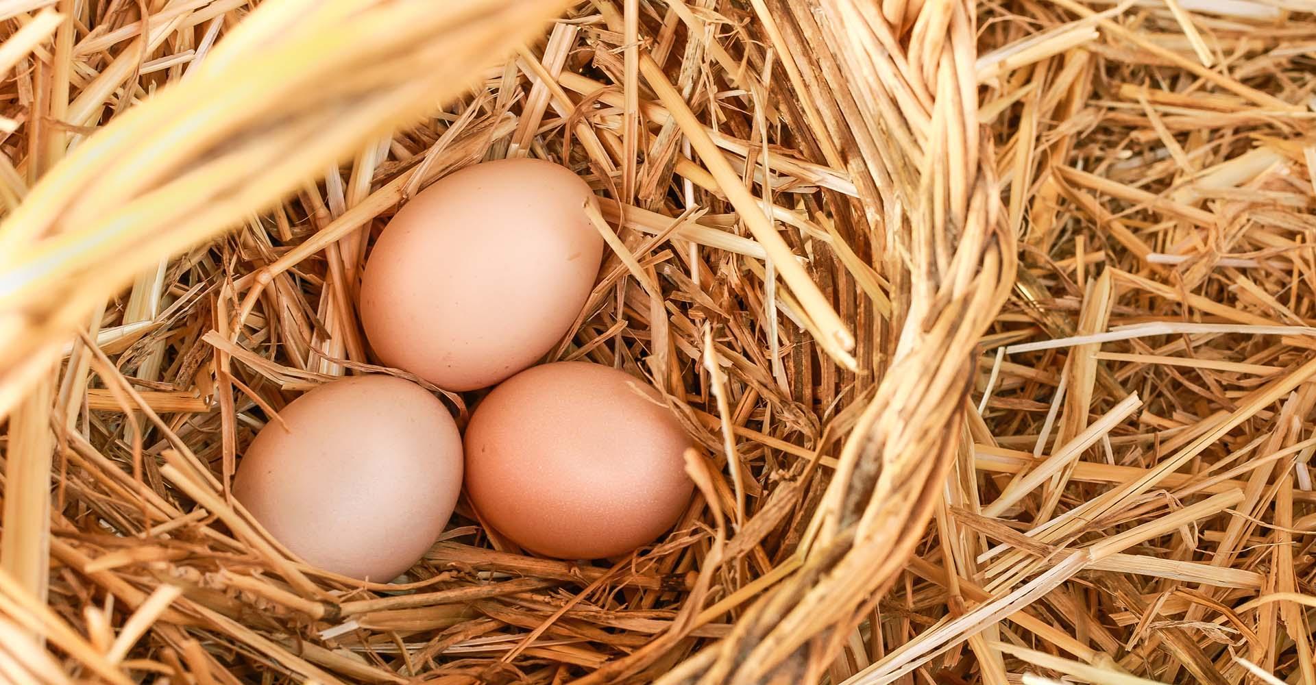 Uova fresce fattoria Il Pago Agriturismo in Basilicata